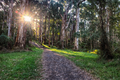 Afternoon sun - Olinda Falls by r reeve, on Flickr