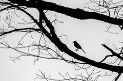 Hopping (Jonas Powell) Tags: cute bird nature photography nikon vermont natural 80200f28 d7000 jonasori jonaspowell avtphotographer