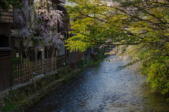 Gion, Kyoto /  (Kaoru Honda) Tags: city nature japan cherry landscape japanese town spring alley nikon kyoto traditional alleyway     gion  japon           d7000