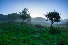 Silent woods... (Tomislav C.) Tags: wood morning trees sky mist mountains nature beauty grass forest sunrise landscape dawn shadows natural meadows croatia naturally