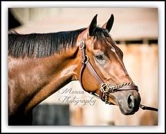Rachel's Valentina (EASY GOER) Tags: summer vacation horses horse ny newyork tourism sports beauty race canon fun athletics track saratoga competition upstate running racing course event 5d ponies athletes tradition races sporting spa thoroughbred equine exciting thoroughbreds compete markiii