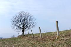 Lone tree (elkarrde) Tags: tree fence landscape nature jastrebarsko sky cloudy meadow grassland leadinglines branches winter february 2011 winter2011 february2011 pentax k20d pentaxk20d dslr apsc tamron adaptall adaptall2 tamronadaptall2 01bb 24mmf25 2425 24mm tamronadaptall201bb24mm125 tamronadaptall224mmf2501bb camera:brand=pentax camera:format=apsc camera:mount=kaf3 camera:model=k20d lens:format=135 lens:maxaperture=25 lens:focallength=24mm lens:brand=tamron lens:model=adaptall201bb24mm125 lens:mount=k lens:mount=adaptall2 location:country=croatia location:city=jastrebarsko jastrebarskocounty
