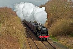 climbing through the trees (midcheshireman) Tags: steam train locomotive railway mainline cheshire royalscot 46115 scotsguardsman salopianexpress