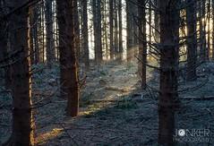 'First Light' (melvinjonker) Tags: ngc naturephotography sony woods trees tree naturelovers nature sunrise sun sunbeam light