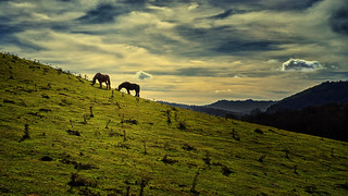 Landscape with horses. Paisaje con caballos.