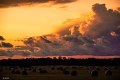 Sunset binz (janiiboy86) Tags: sunset binz clouds light nature sonnenuntergang straw bales