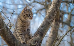 kittens (37) (Vlado Ferenčić) Tags: kitty kittens catsdogs cats animals animalplanet hrvatska hrvatskozagorje zagorje croatia nikond600 sigma15028macro