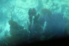 45. John Pennekamp coral reef (Misty Garrick) Tags: johnpennekamp johnpennekampreef johnpennekampcoralreefstatepark coralreef florida keylargofl keylargo floridakeys atlanticocean