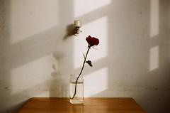 孤寂 (Old Soul Tai) Tags: olympus om2 om automacro 50mm 12 fujiflim fujicolor 100 expired 92006