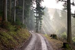 Black Forest - Oppenau (sigi-sunshine) Tags: oppenau schwarzwald blackforest wald waldweg woods sonnenstrahlen rayofsunshine wandern wanderweg deutschland germany badenwürttemberg renchtal