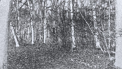 Forest -  B&W drawing (142835323) (Le Photiste) Tags: clay forestappelschafryslânthenetherlandsbwdrawing bwdrawing drawing bw bwart blackwhite forest appelschafryslân appelschathenetherlands fryslânthenetherlands thenetherlands woods trees fun funny artisticimpressions beautifulcapture afeastformyeyes aphotographersview autofocus blinkagain bestpeople'schoice creativeimpuls creativeart creative digifotopro damncoolphotographers digitalcreations django'smaster friendsforever finegold fairplay greatphotographers giveme5 hairygitselite kreativepeople livingwithmultiplesclerosisms lovelyflickr mastersofcreativephotography niceasitgets ngc nature planetearthnature planetearth planetearthart photographers prophoto photographicworld photomix infinitexposure ineffable iqimagequality interesting soe simplysuperb simplybecause thebestshot thepitstopshop thelooklevel1red theredgroup universalart vigilantphotographersunitelevel1 vividstriking wow worldofdetails yourbestoftoday simplythebest motorolamotog cellography art