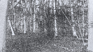 Forest -  B&W drawing (142835323)