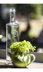 Green Tea (red stilletto) Tags: thedandenongs thepiggerycafe sassafras teapot herbs green tea bottle waterbottle