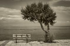 Bench & Tree B&W (panos_adgr) Tags: bw bench tree sea view dock clouds nikon d90 sigma 2870mm f28 diakopto peloponnese greece