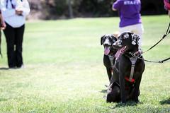 20130519-IMG_4657 (fwisneski) Tags: dogdayafternoon may2013 caninehopefordiabetics