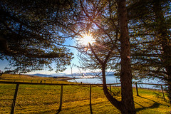 Welcome summer! (Einar Angelsen) Tags: trees sun nature norway photoshop canon landscape norge colorful bright land beams hdr 1740 tromso troms lightroom tnsnes