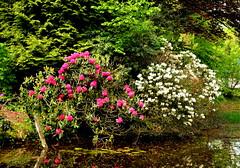 Wezep Flowers Ijsselvliedt (JaapCom) Tags: camera flowers flower holland water dutch bomen nikon fotografie digitale flowering van bloemen jaap bloem jaargetijden wezep bloeien ijsselvliedt werven fotostream d5100