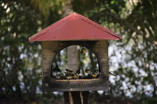 bird outdoors bath feeder banana quit bananaquit