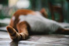 尾。 (Crusade.) Tags: macro zeiss cat canon hongkong 50mm bokeh snapshot mp fullframe makro tails planar zeiss50 5d2