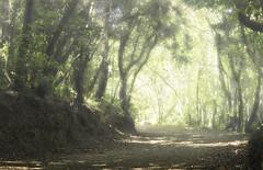 LaurisilvaI (Zu Sanchez) Tags: travel trees tree forest canon landscape arbol eos spain arboles path paisaje canarias bosque tenerife canaryislands phototravel aguagarcia laurisilva zsnchez zusanchez