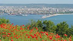 View of Vrna, Bulgaria (vic_burton) Tags: bridge flowers red sea vacation holiday port view harbour bulgaria poppy poppies blacksea blackseacoast