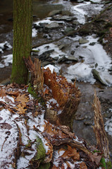 (Shane Henderson) Tags: winter snow tree green ice broken nature mushroom water creek forest outdoors frozen moss woods rocks stream frost roots fungus trunk splintered sarver toddsanctuary buffalotownship toddnaturereserve knixonsrun