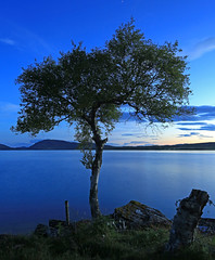 Blue Hour Tree. (Gordie Broon.) Tags: longexposure sunset summer nature water fence landscape scotland spider scenery alba scenic escocia hills bluehour inverness lonetree schottland ecosse 1740l scozia scottishhighlands 2013 dunlichity lochduntelchaig bunachton gordiebroonphotography canon5dmklll