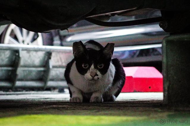 Today's Cat@2013-09-23