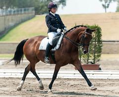131027_AUS_Dressage_Champs_1705.jpg (FranzVenhaus) Tags: australia nsw equestrian dressage siec