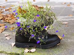 scarpone_Amprimo2013_PB011010_1 (stegdino) Tags: autumn flower fall shoe pot fiore autunno vaso scarpa gamewinner scarpone storybookwinner storybookttwwinner msh0414 pinnacle20131114 msh041418