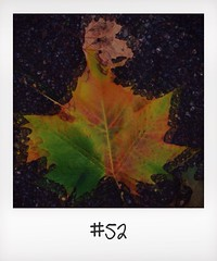 "#DailyPolaroid of 19-11-13 #52 • <a style=""font-size:0.8em;"" href=""http://www.flickr.com/photos/47939785@N05/11030162535/"" target=""_blank"">View on Flickr</a>"