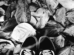 """""""Perch un albero che cade fa pi rumore di un bosco che cresce."""" (sullen_snowflakes) Tags: autumn blackandwhite leaves foglie digital canon eos shoes digitale autunno biancoenero"""