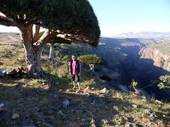 Dragon Tree (Matthew J. Fecteau) Tags: tree lumix dragon yemen dracaena socotra soqotra ymen fecteau iemen   sokotra