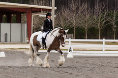 Meetup_Horses_1-19-14-4705.jpg (RobBixbyPhotography) Tags: meetupjacksonvillehorsesequestrian