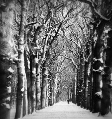 optical illusion (Adrinne - for a peace-loving world! -) Tags: blackwhite zeeland oostkapelle beukenbos winterinthenetherlands panasonictz5 addyvanrooij monochromeformsinvisualarts adrinne demantelingen