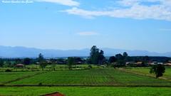 Green fields (VCLS) Tags: brazil sky verde green nature brasil foto farm natureza picture céu fields fotografia fazenda roça pindamonhangaba vcls mygearandme valmirclaudinodossantos