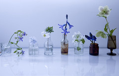 blues and whites from the garden (Wendy:) Tags: flowers blue stilllife glass reflections march bottles 5 ocf hellebore highkey scilla speedlight muscari hiacynth 24105mm woodanemome 580exii ctbgel lightthebackground tp856