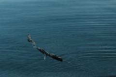 Alone (Moretti Matteo) Tags: wood blue green water grass waves lol lawn wave marco claudio lmao acqua prato emiliano legno roflmao