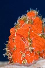 26042013-2013_04_26_16696-c (Penti's Pics) Tags: ocean sea mer reunion nikon underwater scuba diving scubadiving réunion plongée buceo tauchen iledelareunion océan sousmarin d90 reunionisland sousmarine 2013 immersione