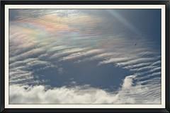West Auckland irisation (Zelda Wynn) Tags: sky bird weather clouds wind auckland sunbeams troposphere irisation solarrays zeldawynnphotography