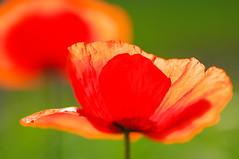 IMGP4155 (Baubec Izzet) Tags: flickrunitedwinner