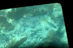 42. John Pennekamp glass bottom boat (Misty Garrick) Tags: johnpennekamp johnpennekampreef johnpennekampcoralreefstatepark coralreef florida keylargofl keylargo floridakeys atlanticocean