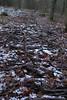 Brashline (mike1727) Tags: jerseyfarmwoodlandpark dogwalk coppice img4970 brash