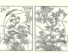 Eulalia grass, monkshood, Chinese trumpet-creeper and Japanese primrose (Japanese Flower and Bird Art) Tags: flower eulalia grass miscanthus sinensis poaceae monkshood aconitum chinense ranunculaceae chinese trumpetcreeper campsis grandiflora bignoniaceae primrose primula sieboldii primulaceae