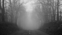 Uncertain Futures (+Lonnie & Lou+) Tags: nature travel road fog morning blackandwhite sony ohio rural explore sky landscape forest winter path