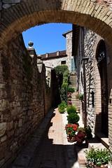 Spello - Umbria Italy!! (Biagio ( Ricordi )) Tags: borghi fiori flower umbria spello italy