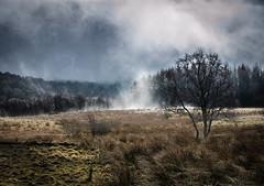 Mojo Rising (daedmike) Tags: sheep damp steam scotland field farming lambing bridgeofcally roadside trees grass clouds mist anger heat seiyan dragonball evaporation weather