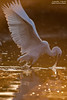 garzetta in controluce (taronik) Tags: natura uccelli acqua riflessi animali controluce garzetta cacciafotografica blinkagain me2youphotographylevel1