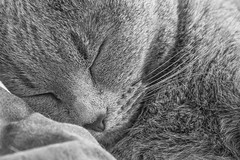 OEM5-P9220546-PR Olympus OM-D E-M5 Brisbane Australia (Nic (Luckypenguin)) Tags: blackandwhite bw monochrome cat monocromo kitten noiretblanc australia brisbane sampleimages samplephotos monocromatico samplepics olympuscamera olympusdigitalcamera luckypenguin micro43 microfourthirds olympusem5 olympusomdem5 panasoniclumixg14140mmf458ois