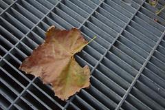 Grate Leaf (Rich Renomeron) Tags: dc washington leaf canonefs1022mmf3545usm canoneos60d